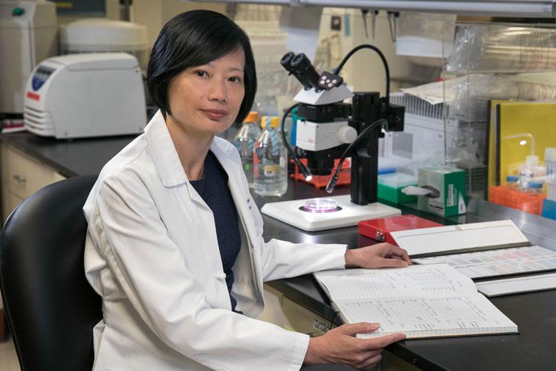 Sophie Deng, M.D., Ph.D.