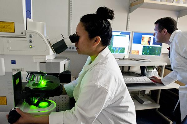 A researcher uses a microscope to examine samples