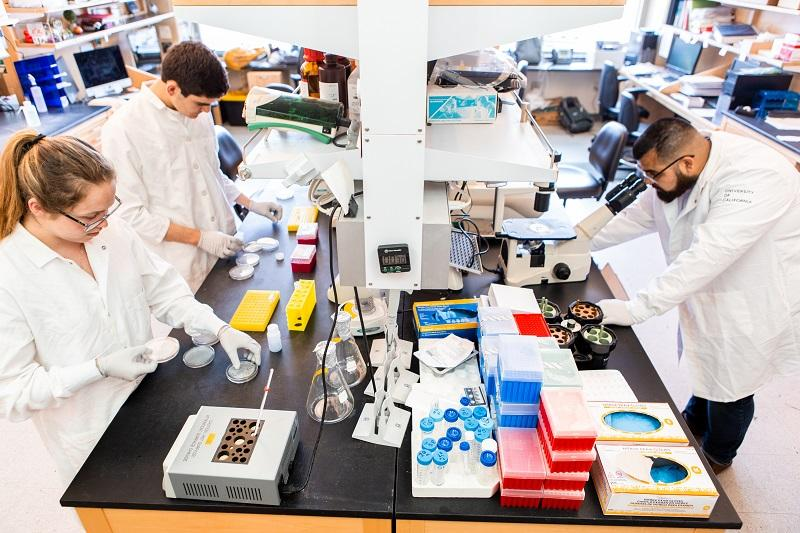 Dr. Donald Kohn's Lab