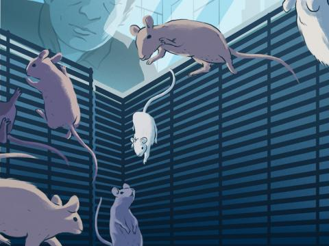 Illustration of mice adapting to their custom-designed space habitat on board the International Space Station.