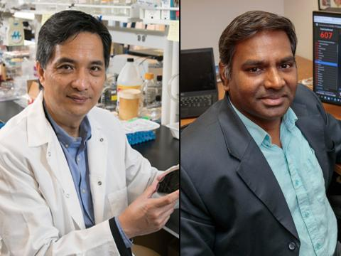 Song Li, Ph.D., and Vaithilingaraja Arumugaswami, Ph.D.