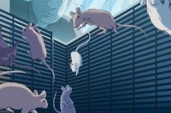 Illustration of mice adapting to their custom-designed space habitat on board the International Space Station. Image courtesy of the Center for the Advancement of Science in Space